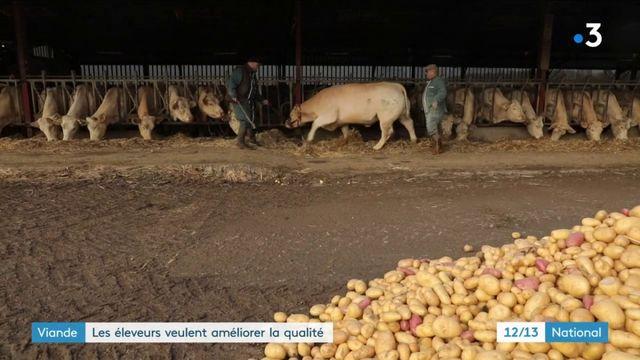 Saône-et-Loire : les éleveurs veulent améliorer la qualité de la viande