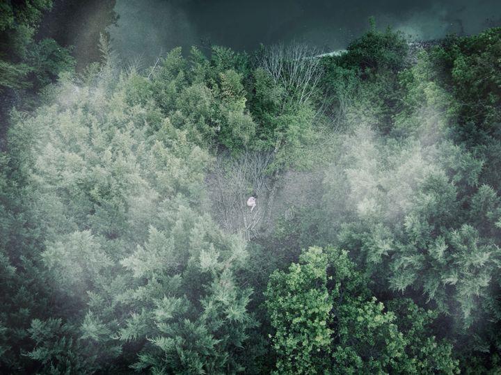 Nu dans les arbres de Sologne (David Templier)