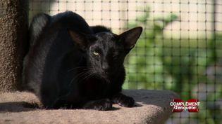 Complément d'enquête.En Australie, l'île des kangourous est devenue l'enfer des chats (COMPLÉMENT D'ENQUÊTE / FRANCE 2)