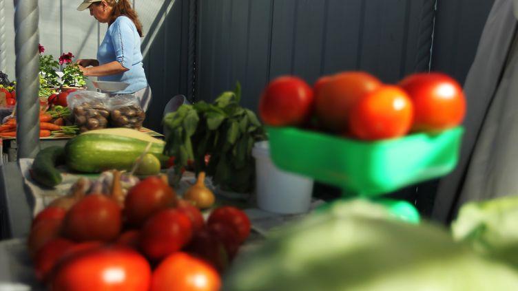 Il y a une variété de tomate hybride qui se vend toute l'année car elle pousse sous serres, en Espagne comme aux Pays-Bas. Elle est calibrée et résiste au transport. Mais gustativement, elle déçoit. (KONSTANTIN CHALABOV / RIA NOVOSTI / AFP)