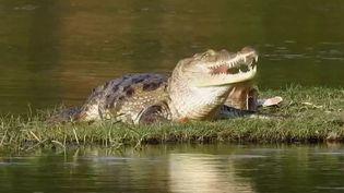 Inde : dans un village de l'ouest, les habitants cohabitent avec les crocodiles (France 2)