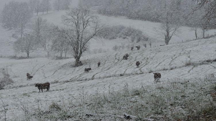 La neige tombe sur un champ dans le Cantal, le 29 novembre 2017. (CHRISTIAN STAVEL / MAXPPP)