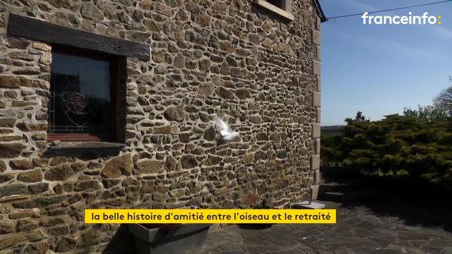 Un retraité des Côtes-d'Armor entretient une amitié étonnante avec un pigeon