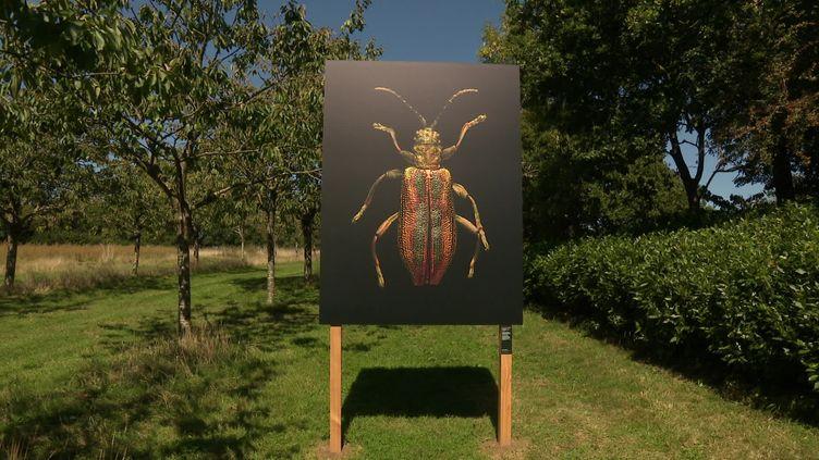 Portrait d'insecte réalisé par Levon Biss (France 3 Bretagne)