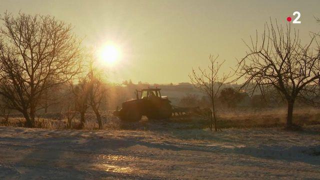 Vague de froid : l'Alsace s'organise face aux températures polaires
