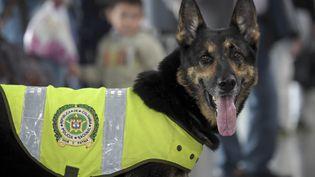 La chienne Sombra, le 27 juillet 2018 à l'aéroport de Bogota, en Colombie. (RAUL ARBOLEDA / AFP)