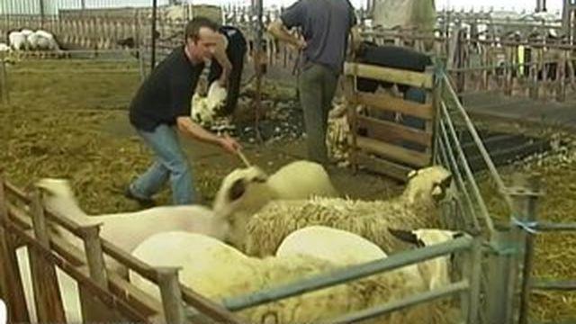 À la découverte des secrets de la filière laine