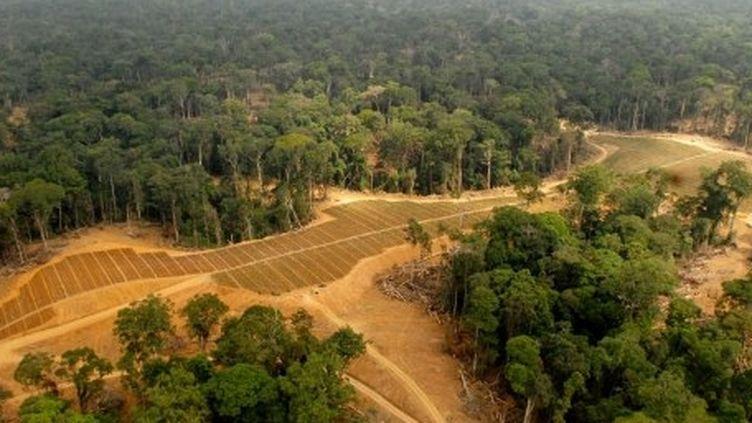 Gabon : champs convertis à la culture du palmier à huile dans la luxuriante forêt de Kango, à 60 km de Libreville. (AFP PHOTO / XAVIER BOURGOIS)