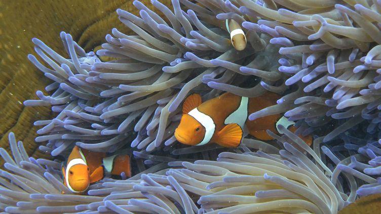 La grande barrière de corail en Australie, le 22 septembre 2014. Les coraux sont affectés par l'acidification des océans, selon une étude publiée le 8 octobre 2014. (WILLIAM WEST / AFP)