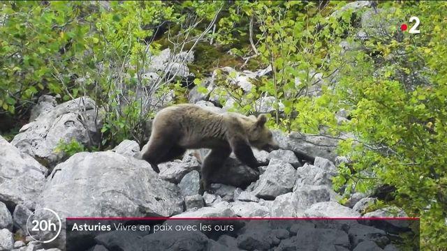 Espagne : dans les Asturies, on vit en paix avec les ours