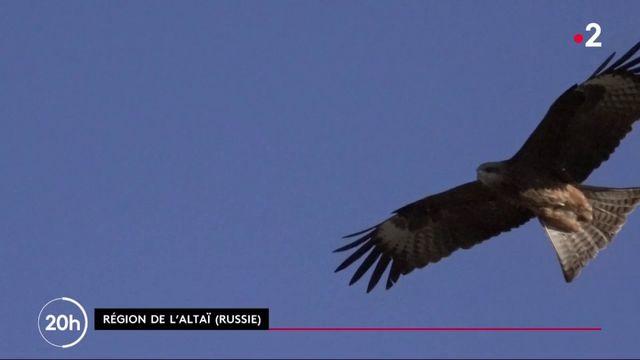 Environnement : les gardiens des faucons de l'Altaï