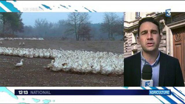 Pacte de mesure contre  la grippe aviaire : une signature compliquée ?