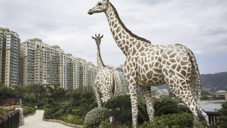 le lieu unique, HUMANITÉ VÉGÉTALE, MARIO DEL CURTO – HONG KONG, JARDIN CRÉATIONNISTE, CHINE, 2015 (MARIO DEL CURTO)