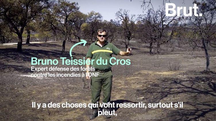"""VIDEO. """"Pour retrouver la forêt telle qu'on l'a vue avant le feu, il faudra une trentaine d'années"""" (BRUT)"""