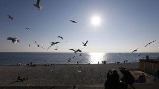 Sur la Promenade des Anglais, à Nice (Alpes Maritimes), on profite des records de températures. Lundi, on enregistrait 14°C face à la mer. (VALERY HACHE / AFP)