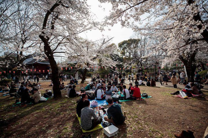 Des personnes pique-niquent sous les cerisiers en fleurs dans le parc d'Ueno, à Tokyo, le 22 mars 2020. (BEHROUZ MEHRI / AFP)