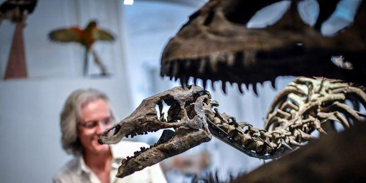 Crâne de Camptosaurus derrière les mâchoires de l'Allosaurus, deux squelettes de dinosaures qui n'ont pas trouvé preneur à la vente aux enchères d'Artcurial en novembre 2018  (STEPHANE DE SAKUTIN / AFP)