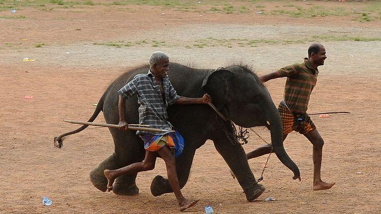 Eléphant au Sri Lanka (AFP/Lakruwan Wanniarachchi)
