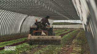 Faute de main-d'œuvre pour les ramasser, il passe toute sa récolte de salades au broyeur (ENVOYÉ SPÉCIAL  / FRANCE 2)