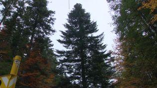 Découpe de l'arbre en Moselle (France 3 Toutes Régions)