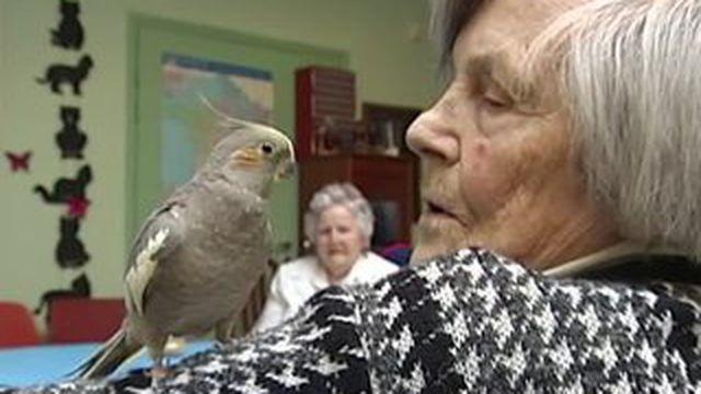 Brest : une perruche pour aider les malades d'Alzheimer