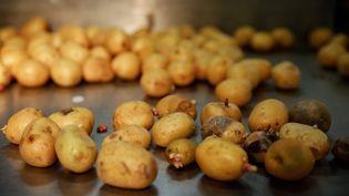 Des pommes de terre au marché internationale de Rungis. (THOMAS PADILLA / MAXPPP)