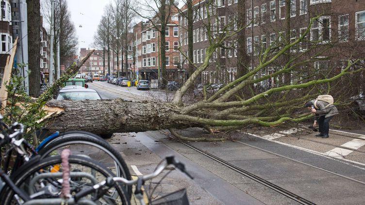 Un arbre arraché, le 18 janvier 2018 à Amsterdam (Pays-Bas), pendant le passage d'une tempête hivernale. (PETER DEJONG/AP/SIPA / AP)