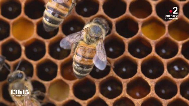 """VIDEO. Biodiversité : """"Quand l'abeille va mal, l'homme va mal, inévitablement"""", affirme un apiculteur lanceur d'alerte"""