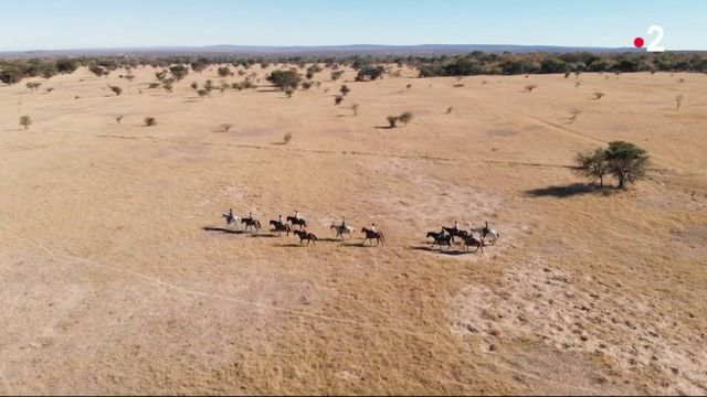 Afrique du Sud : un safari à dos de cheval