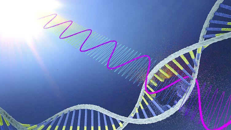 Une illustration représentantl'ADN endommagé par des rayonsUV. (CHRISTOPH BURGSTEDT/SCIENCE PHOTO LIBRARY / AFP)
