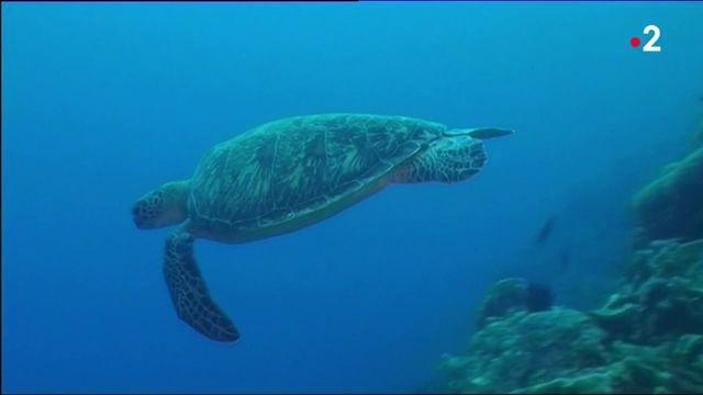 Hérault : naissance inédite de tortues marines