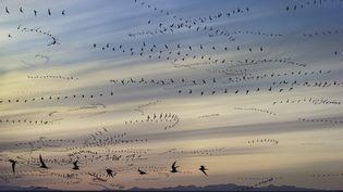 Des sternes arctiques au coucher du soleil. (ARCTIC-IMAGES / STONE RF / GETTY IMAGES)