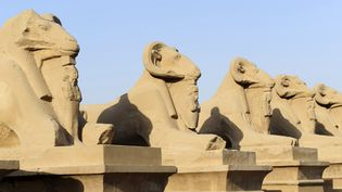 Les sphinx à tête de bélier (criosphinx) du temple de Louxor (Egypte). (FREDERIC SOREAU / PHOTONONSTOP / AFP)