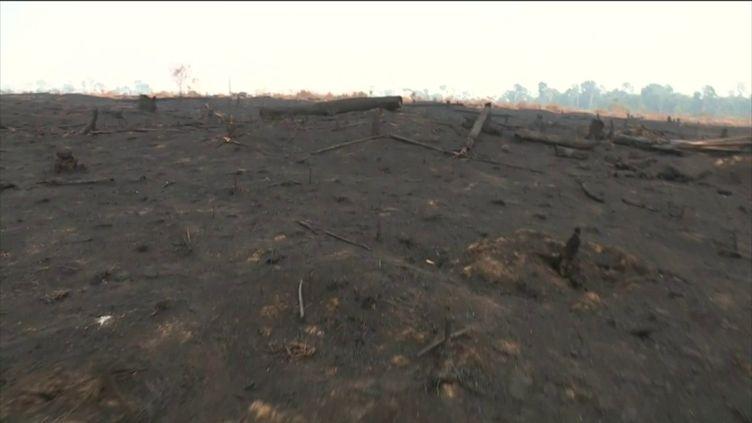 La forêt amazonienne détruite et incendiée (FRANCEINFO)