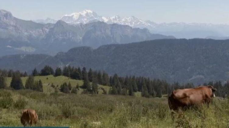 Chaque été, les alpages sont prisés des randonneurs. (France 3)