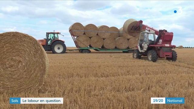 Agriculture : protéger les sols sans labourer ?