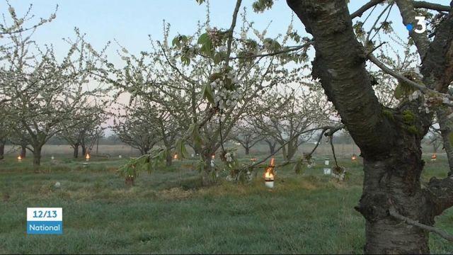 Gel : une première nuit d'angoisse dans les vignobles et vergers