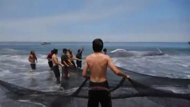 Le cétacé, qui mesurait plus de 20 mètres, a été remis à l'eau après plus de trois heures d'effort.