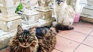 Les Français ont 30 millions d'animaux de compagnie. Surtout des chats, mais ils abandonnent encore 800 000 d'entre eux chaque année. Le gouvernement légifère et veut encadrer l'adoption de nos animaux domestiques. (JULIO PELAEZ / MAXPPP)