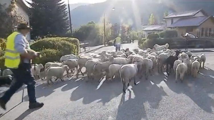 Pour contester la suppression d'une classe de primaire, des parents d'élèves ont demandé à un éleveur d'amener des moutons lors d'une manifestation. Le message ? Les élèves ne sont pas des moutons ! (FRANCE 3)