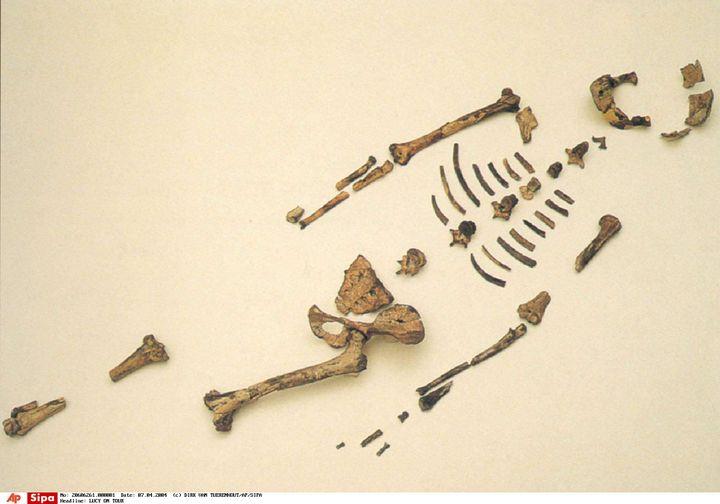 Les ossements de Lucy sont exposés, le 7 avril 2004, à Addis-Abeba (Ethiopie). (DIRK VAN TUERENHOUT / AP / SIPA)