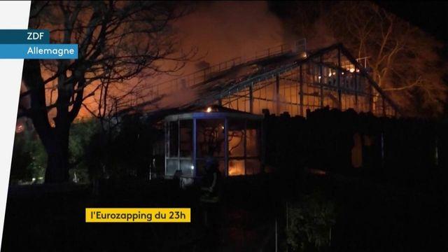 L'Eurozapping du 23h : Un zoo prend feu lors du Nouvel An en Allemagne