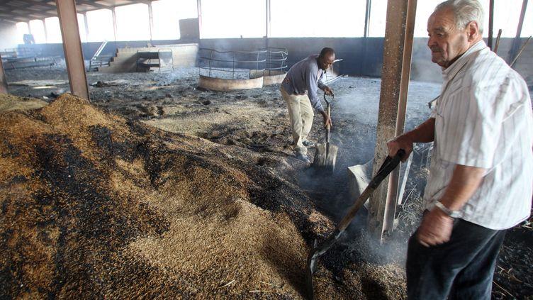Un éleveur de brebis à Viure d'Ampurdan près de Figuéres, le 24 juillet 2012, inspecte ses bêtes et son fourrage après les dégâts causés par les incendies en Catalogne. (RAYMOND ROIG / AFP)