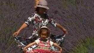 Provence : L'heure est à la récolte de la lavande (FRANCE 2)