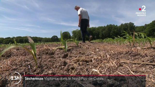 Sécheresse : le Nord et le Pas-de-Calais en alerte