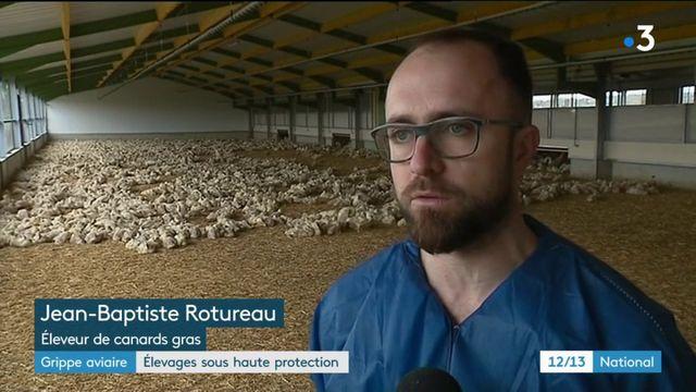 Grippe aviaire : élevage sous haute protection
