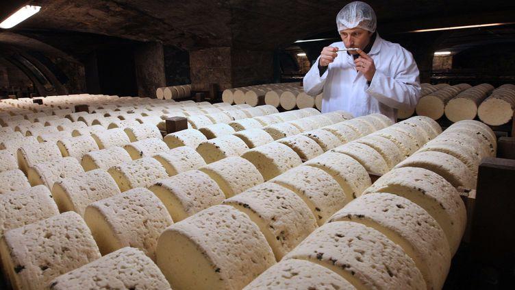 Un affineur sent un roquefort, le 21 janvier 2009, dans le sous-sol d'une fromagerie à Roquefort (Aveyron). (BOB EDME / AP / SIPA)