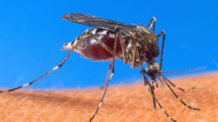 Le paludisme est dû à un parasite, le Plasmodium, qui, transmis par les moustiques, provoque fièvre, maux de tête et vomissements et peut entraîner rapidement le décès par troubles circulatoires sans traitement. (USDA / AFP)