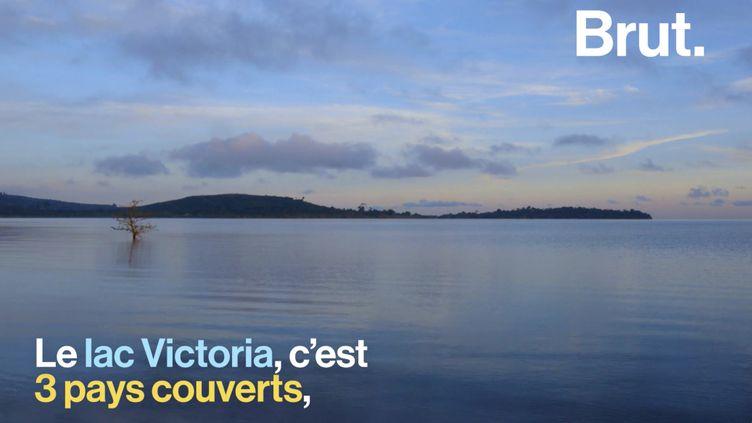 VIDEO. Surpêche, espèces invasives… Le plus grand lac d'Afrique fortement menacé (BRUT)