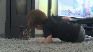 Un enfant joue avec un chaton accueilli pour une durée limitée par sa mère. (France 3 Caen)